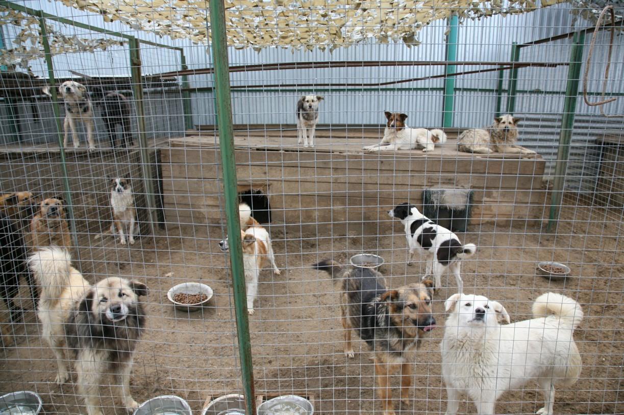 приюты для животных в краснодаре с фото удалось сделать